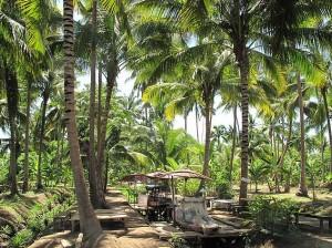 Plantations de cocotiers derrière le canal d'Amphawa