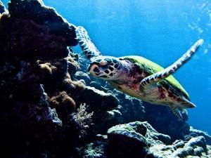 Plongée sous-marine à Koh Lanta