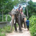 Balade à dos d'éléphant à Koh Phangan