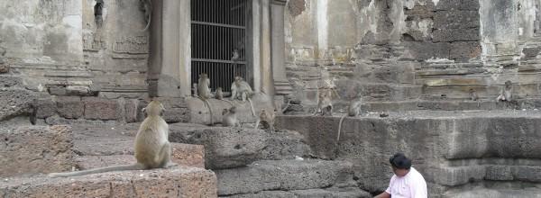 Palais des singes de Lopburi