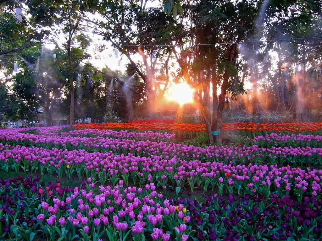Paysage de fleurs à Chiang Mai