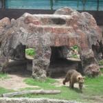 Il y a aussi des ours à la ferme de Samutprakarn !