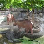 Deux hippopotames au Zoo de Samutprakarn