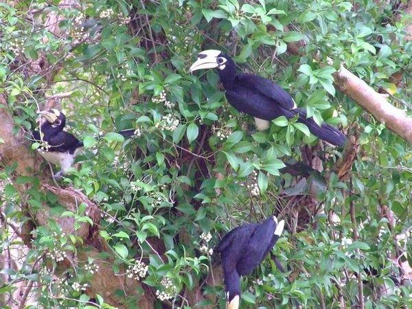 Des oiseaux exotiques de Koh Tarutao