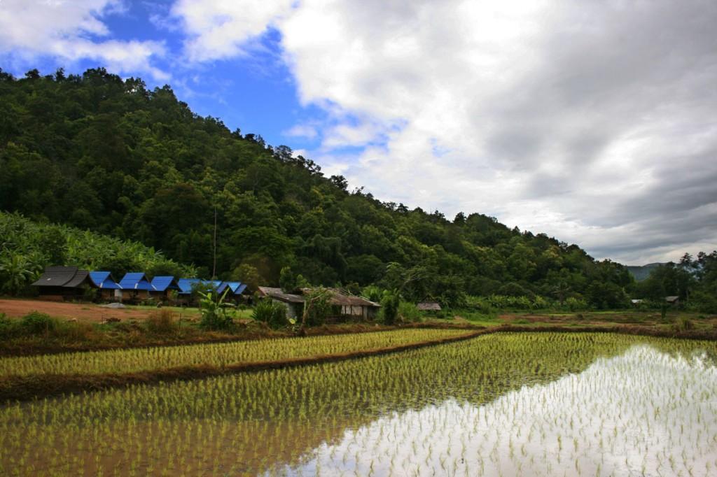 Rizière dans le Sud de Chiang Mai