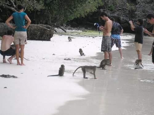 124712-monkey-beach-phi-phi-thailand