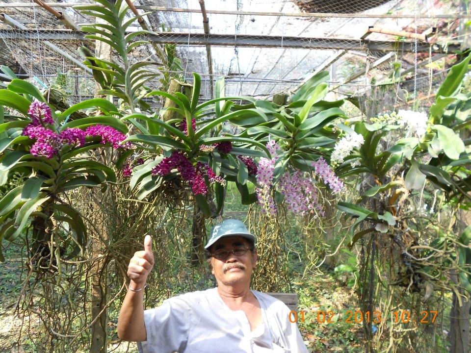 Larousse décrit l'orchidéophile comme étant un amateur d'orchidées, pratiquant la collection, la culture, la reproduction des orchidées ornementales.