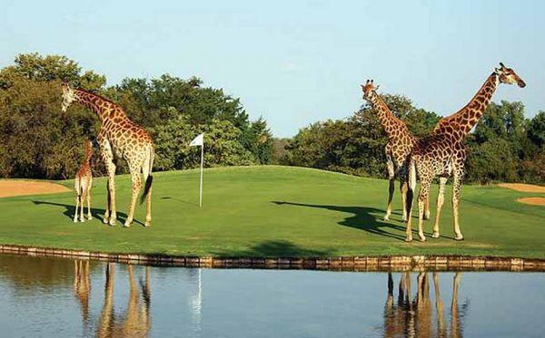 Golf Afrique du Sud