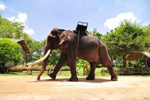 trek-elephant-phuket