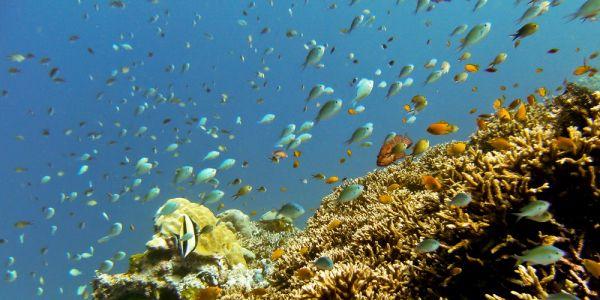 Snorkeling Koh Tachai